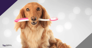 how to remove plaque in dogs